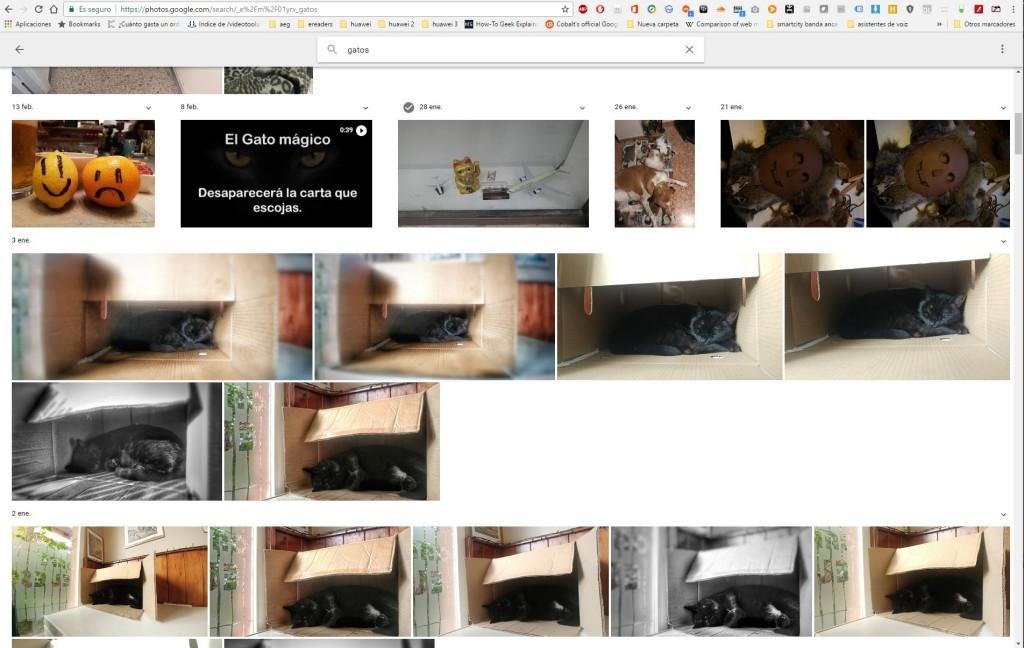 buscar fotos gatos google