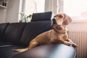 El pelo de las mascotas en el hogar